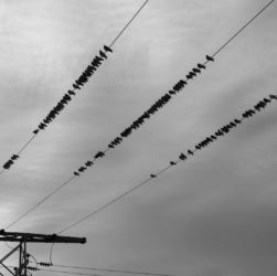 wire-bird-39-s-eye-view-power